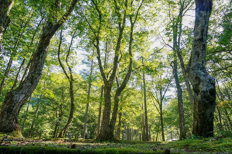 森林に囲まれた環境